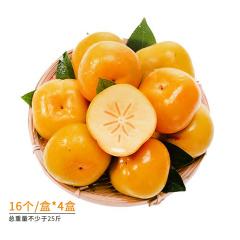 广西恭城脆柿尝鲜礼盒组 货号122570