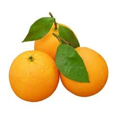 【新鲜水果】湖北秭归夏橙 中果/大果 3斤/5斤/9斤 多种规格可选
