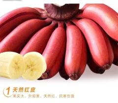 上品红皮贵妃蕉口感如蜜肉质细滑兰花香味贵妃蕉5斤装