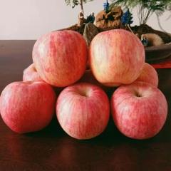 {峻农果品}烟台栖霞红富士苹果75cm优质果净重2.5kg包邮