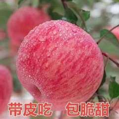 栖霞红富士junnongB优质果85cm礼盒15个装4.5kg包邮