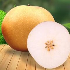【新鲜水果】山东元真梨5斤家庭装 单果约480g