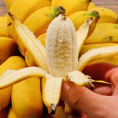 广西现摘小米蕉皇帝蕉5斤装